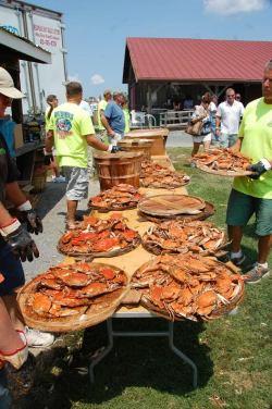 Dozens of Crabs